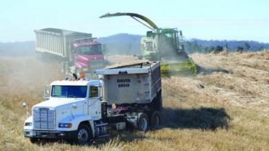 The logistics of moving harvested biomass from field to facility is a large part of the cost and operations associated with its production. Constant, efficient use of equipment is crucial.