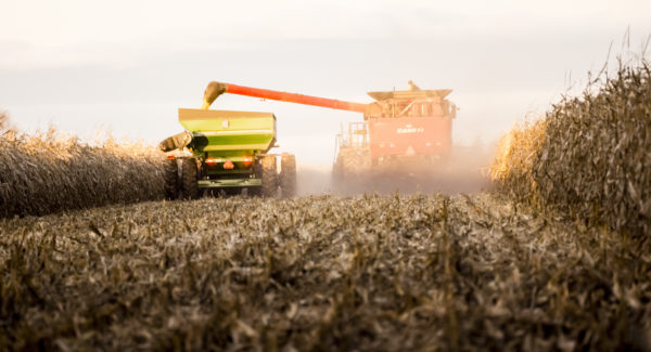 Saint-Hugues, Сanada - November 9, 2016: By late afternoon, the maize harvest in a field in the municipality of Saint-Hugues, near the town of Saint-Hyacinthe, Montérégie. A Case brand tractor in operation.